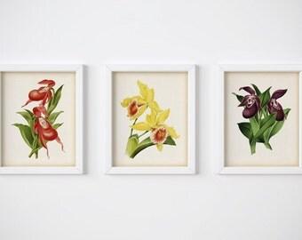 Set of 3 flower prints, Orchid prints, Botanical illustration vintage, Antique art print, Printable art, Wall art download, 8x10, 11x14, JPG