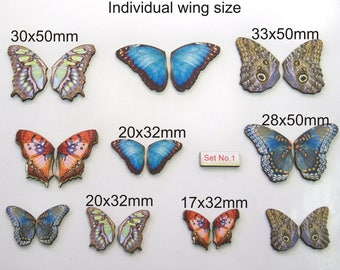 20 X Individual Butterfly Wings (Large and Small) Set No. 1.