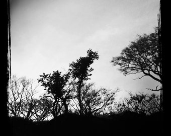 Artist signed black and white, cool toned fine art photographic print: Himachal #2, 2016