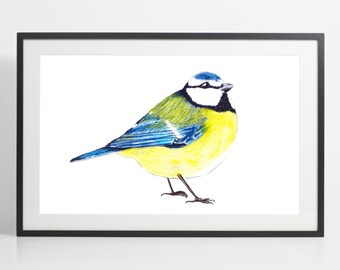 Watercolor Blue Tit Painting Print – bird art, bird watercolor, bird illustration, blue tit illustration, art print