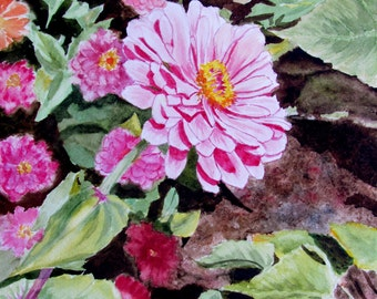 Zinnia flowers original watercolor painting pink and rose small painting 8 1/2 x 11