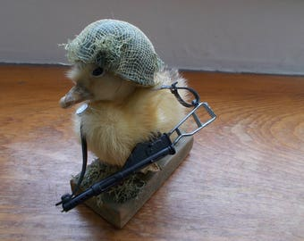Private Duck reporting for duty! Taxidermy Duckling.