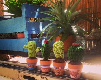 Lot small Cactus (x 4)