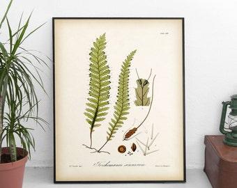 Fern art, Antique fern illustration, Instant download fern print, Fern printable, Botanical illustration, Vintage botanical, 8x10, 11x14 JPG