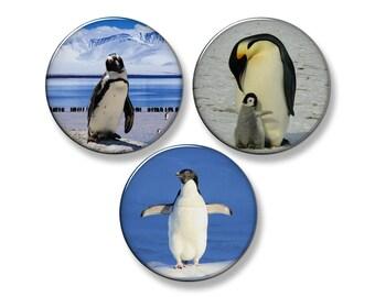 "PENGUIN PHOTOS Penguins Fridge Magnet Set - 3 Large 2.25"" Round Magnets"