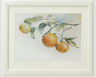 Three clementines, original watercolor painting
