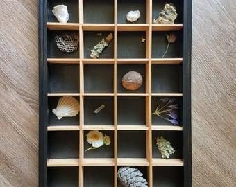 Curiosity shelf display- cabinet of curiosities natural history display- homeschool, montessori,education