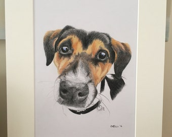Taffy - Jack Russel commission