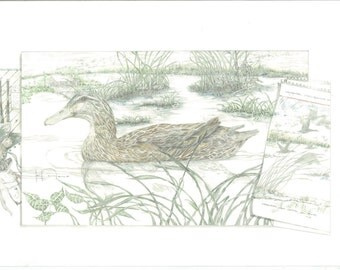 Mallard Hen with Field Sketch