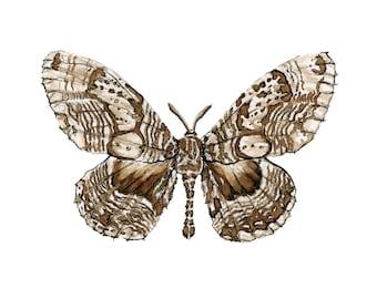Walnut ink moth: Giclee print