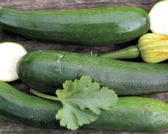 Summer Squash Black Beauty  Zucchini Seeds-Organic-NON-GMO-Sweet