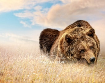 Teddybear, Bear, Brownbear, Gras, Sky, Background, Animal, Wildlife, Photoshop, Manipulation, Download, Art, Fantasy, magic