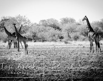 Giraffe, African Safari Photography, Black and White, Wall Art and Home Decor - The Tower