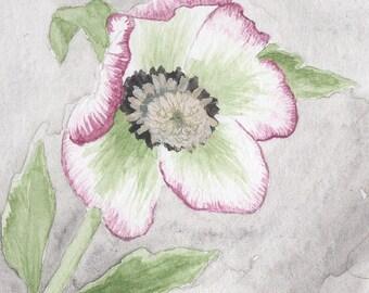 Spring Hellebore Flower, watercolor painting, art print, floral print, botanical illustration, wall art