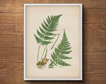 Botanical illustration of ferns, Fern leaf print, Fern wall print, Vintage botanical print, Botanical illustration, Kitchen decor, Wall art