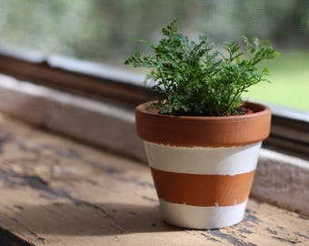 Small Terracotta Pots - Simple Stripe Designs