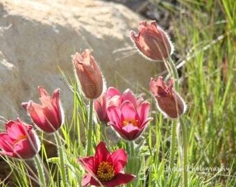 Deadwood Flowers