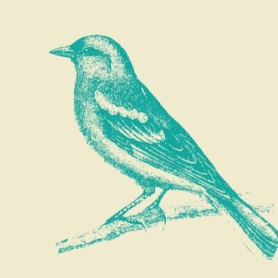 songbirdsandlace