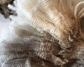 1 ounce of Raw Wool: Velma a CVM Romeldale