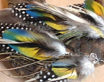 Beautiful macaw feather earrings, long chain rainbow macaw feather with grey and white, cruelty free feathers