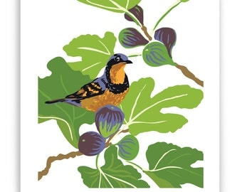"ART142: Varied Thrush in Fig Tree Art Reproduction 8"" x 10"""