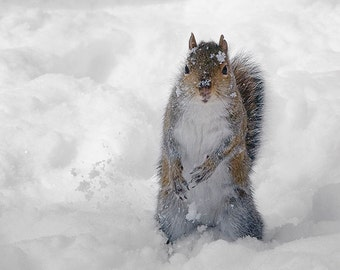 Animal Photography, Squirrel Photograph, Cute Animal Print, White Winter Snow, Snowflakes, Nursery Decor - Playing in the Snow