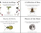 4 Sets - Learning Card Bundle - Phases of the Moon, Seed and Seedlings, Insect Cards with Moths and Beetles, and A Collection of Bees