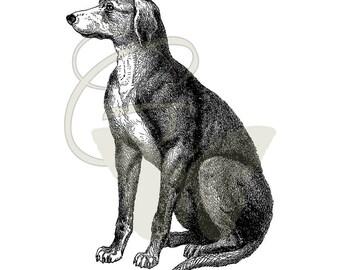 Printable Dog Transfer Digital Clip Art Image Illustration Antique Artwork Download