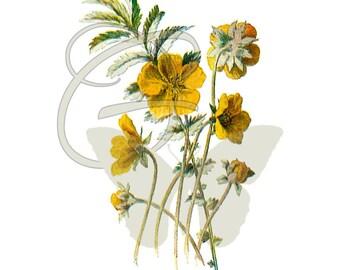 Flower Clip Art Digital Download Wildflower Scrapbooking Crafting Botanical Illustration Printable Artwork