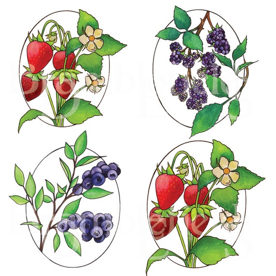 Berry Series- Set of 4 matted Prints