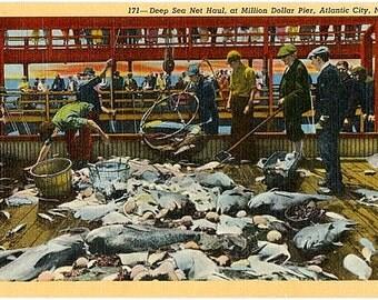 Vintage New Jersey Postcard - The Deep Sea Net Haul at Million Dollar Pier in Atlantic City (Unused)
