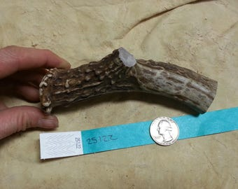 Deer Antler Piece for Knife Handle- Medium- Lot No. 25122TURQ