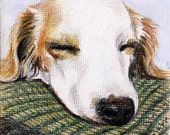 "4"" x 4"" custom pet portrait colored pencil"