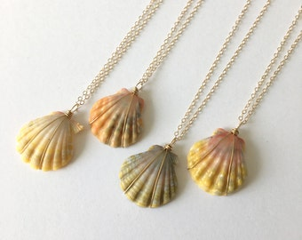 Sunrise Shell Necklace, Sunrise Shell Jewelry, Sunrise Shell, 14K Gold Filled, Made In Hawaii, Hawaiian Jewelry, Simply Sparkle Designs