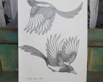 Magpies Illustration Original A4 Pencil Drawing