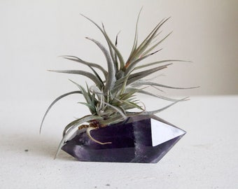 Air Plant on Chevron Amethyst Crystal, Polished Geometric Crystal, Dream Amethyst Airplanter, Spiritual Gift Under 50