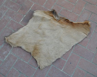 Real Beautiful Large Tanned Elk Pelt Fur Scrap Piece