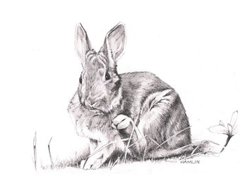 Snowshoe Hare - Open edition print of an original drawing (fits 11x14 frame)