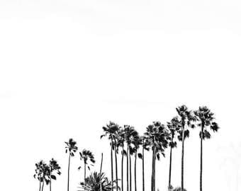 Black & White Palm Tree Photography, Sillouette of Palm Trees in Black and White, Monochrome, Tropical Palm Decor, Palm Tree Photography