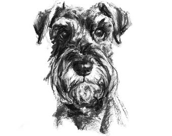 Schnauzer dog Drawing - fine art dog print - Schnauzer gift