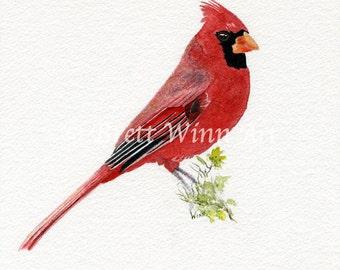 Cardinal Print, Printable Art, Cardinal Art, Home Decor, Watercolor, Wall decor, Instant Download