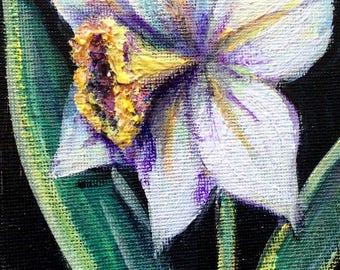 "Daffodil flowers still life original floral painting 6 x 4"""