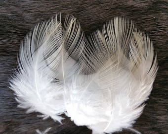 Natural Ivory White Rooster Plumage - Lot of 100