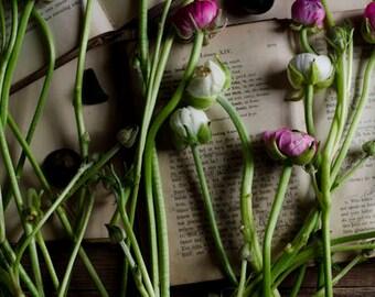 farmhouse decor, rustic flower art, ranunculus art print, flower and book art, girly wall art, pink flower art, floral nursery art,