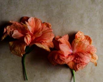botanical art print, floral nursery art, peach flower decor, hibiscus art print, peach and beige, romantic floral print, girls room decor