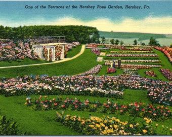 Hershey, Pennsylvania, Hershey Rose Garden - Vintage Postcard - Postcard - Unused (AA)