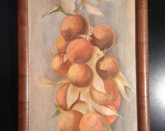Vintage watercolor painting of bunch of apricots persimmons peaches fruit