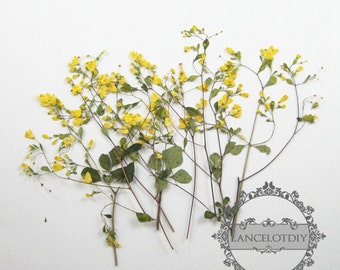 1 small packs real dry pressed yellow flower leaf craft for DIY glass dome resin filling 1503081