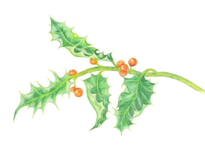 Pagan Holly Art print,