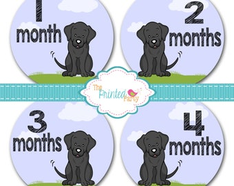 Monthly Baby Stickers - Baby Shower Gift and Photo Prop - black lab - labrador - 312